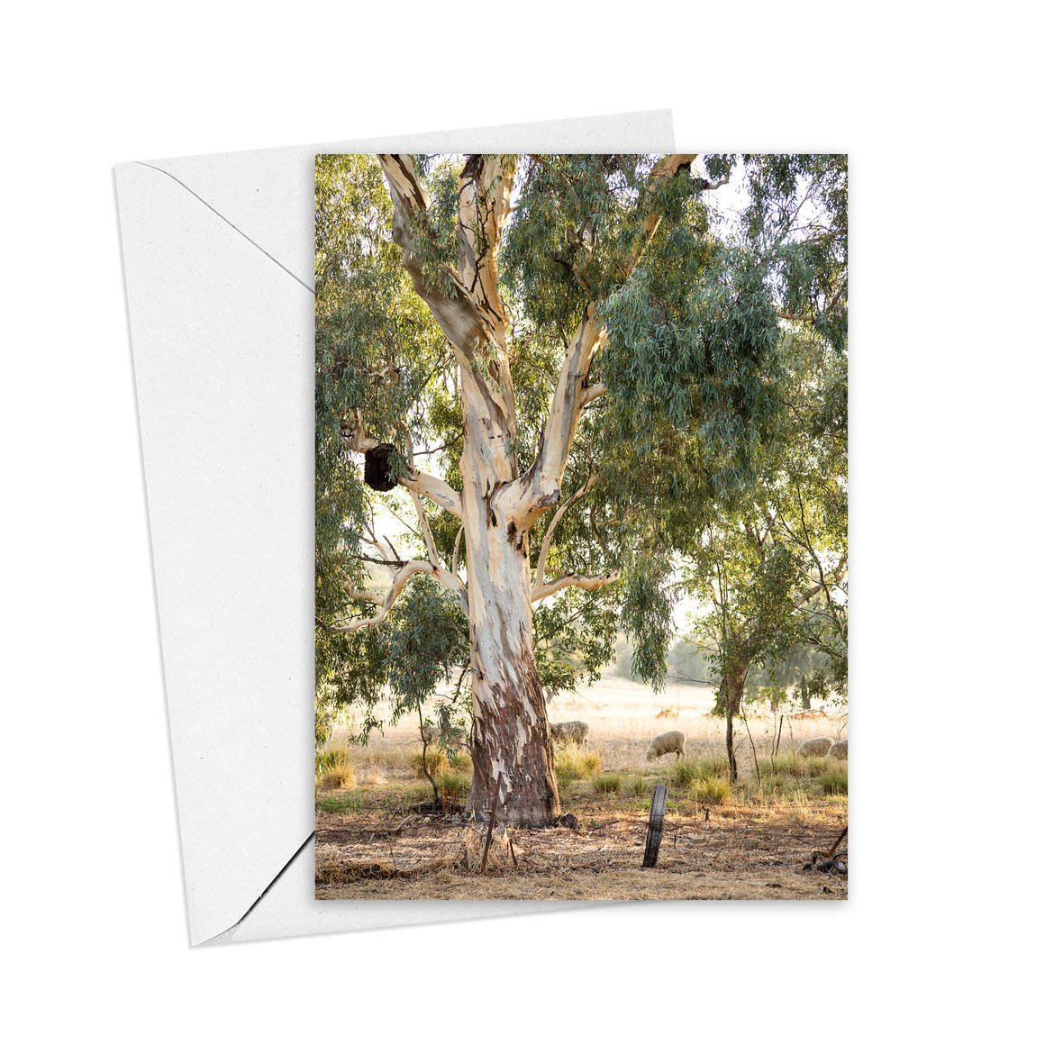 Red Gums and Sheep Greeting Card   Trada Marketplace