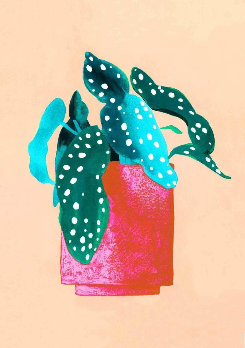 Begonia Card | Trada Marketplace