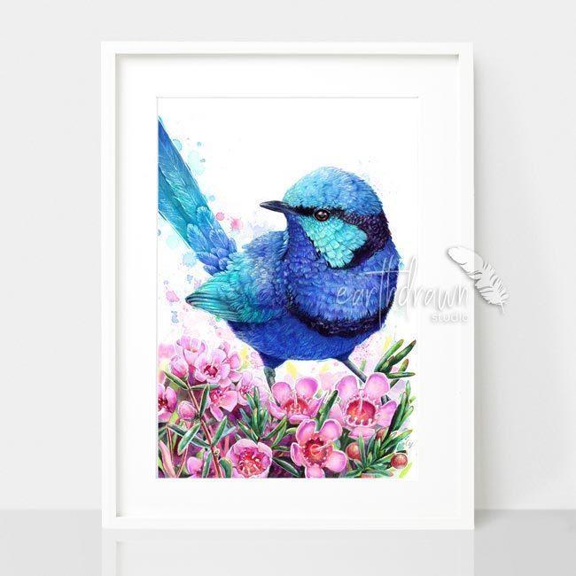 Blue Wren & Geraldton Wax Art Print | Trada Marketplace