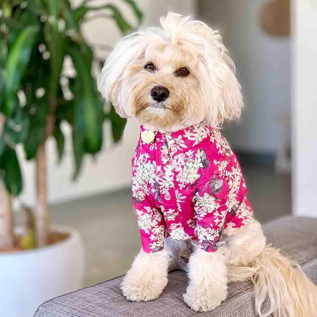 Liberty Dog Shirt - Pink Floral   Trada Marketplace