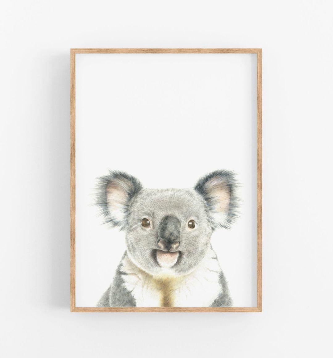 KAI THE KOALA BEAR   Trada Marketplace