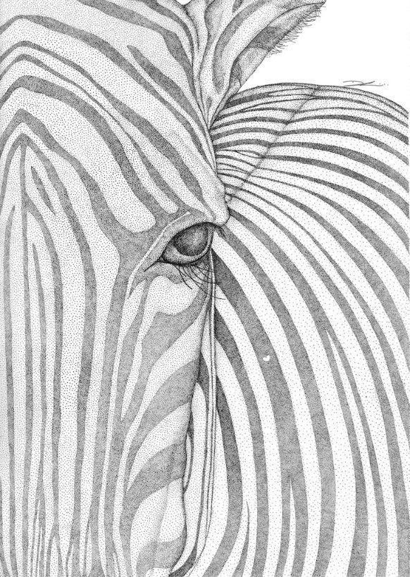 Zane the Zebra   Trada Marketplace