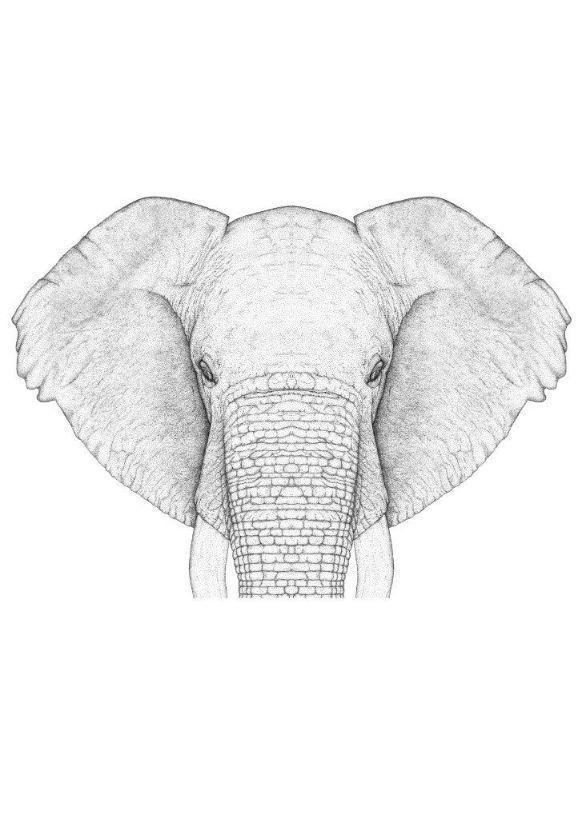 Ethan The Elephant - Full Face   Trada Marketplace