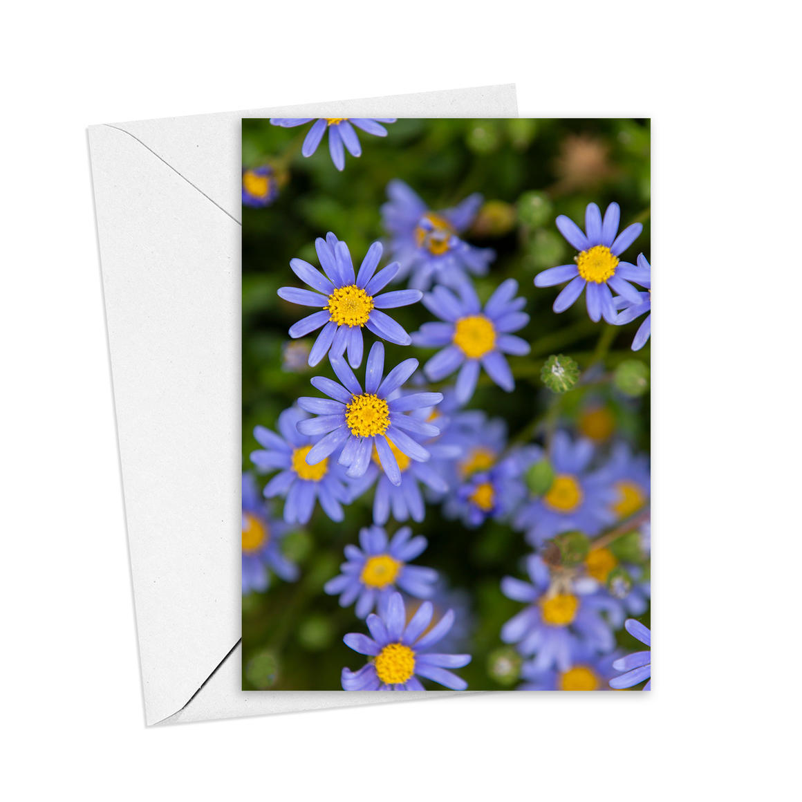 Blue Daisies Greeting Card   Trada Marketplace