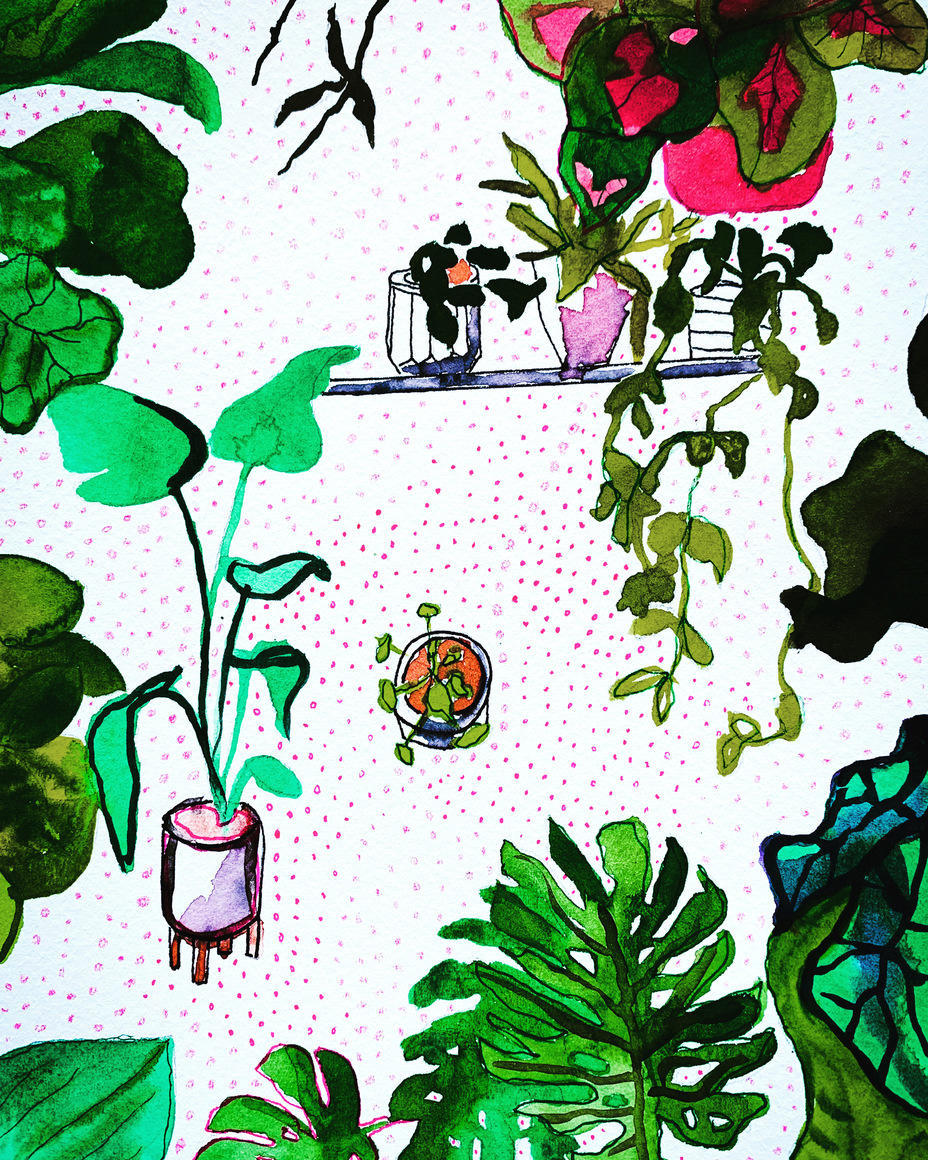 Indoor Jungle5 | Trada Marketplace