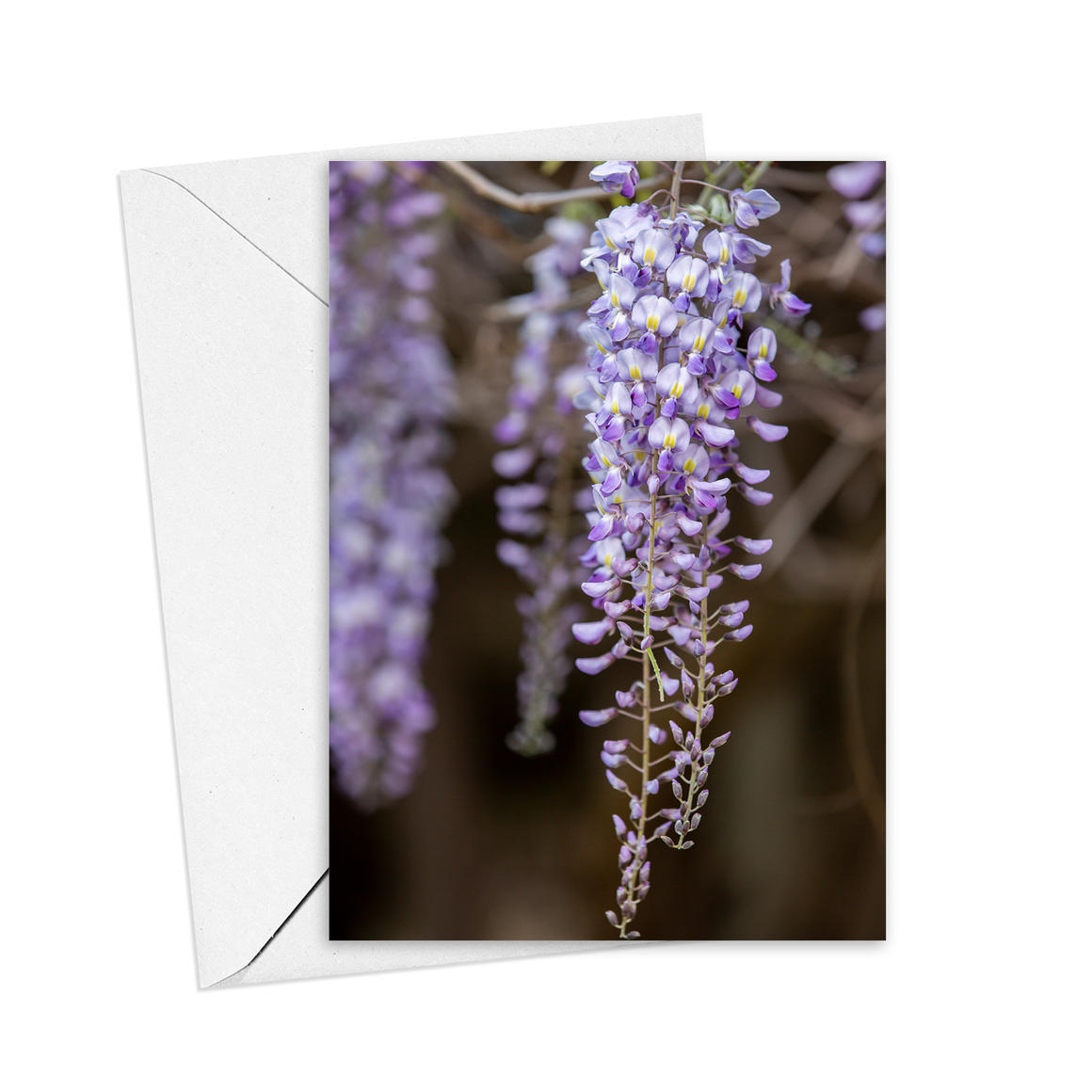 Wisteria Greeting Card   Trada Marketplace