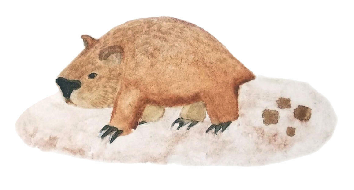 Wombat Poo   Trada Marketplace