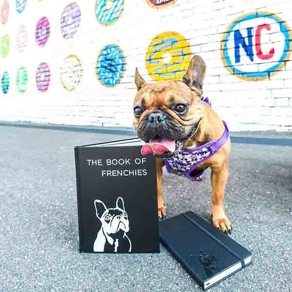 The Dog Book Company | Trada Marketplace