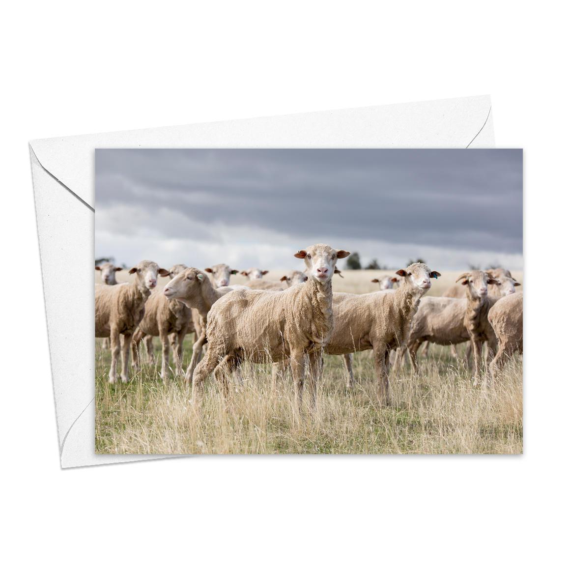 The Ewes Greeting Card   Trada Marketplace