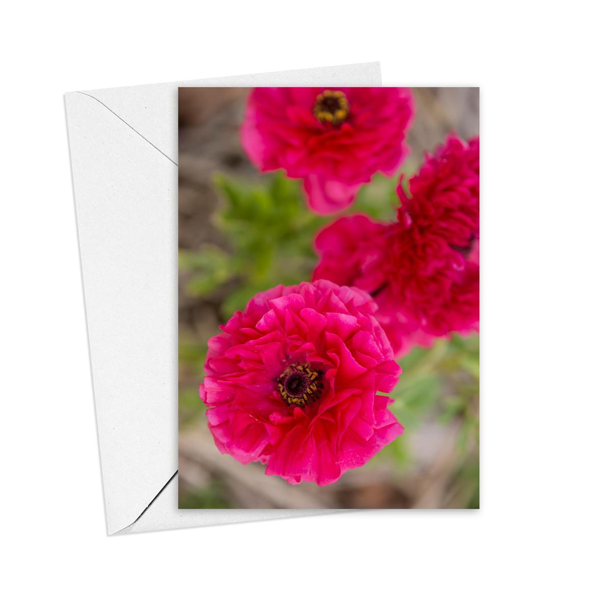 Raununculus Greeting Card   Trada Marketplace
