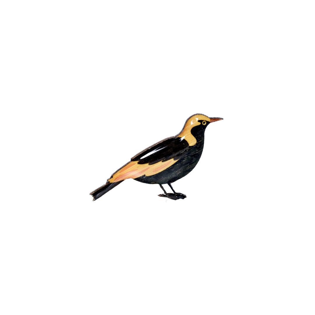 Bowerbird - Regent Bowerbird Brooch   Trada Marketplace