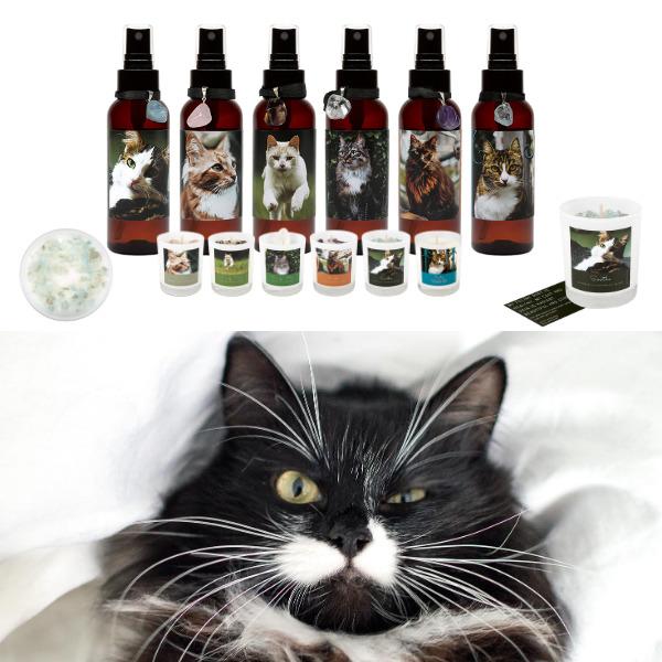 Kitty Kitchen | Trada Marketplace