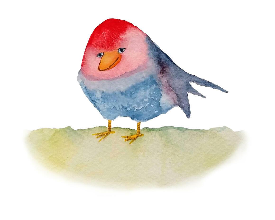 Chubby Bird   Trada Marketplace