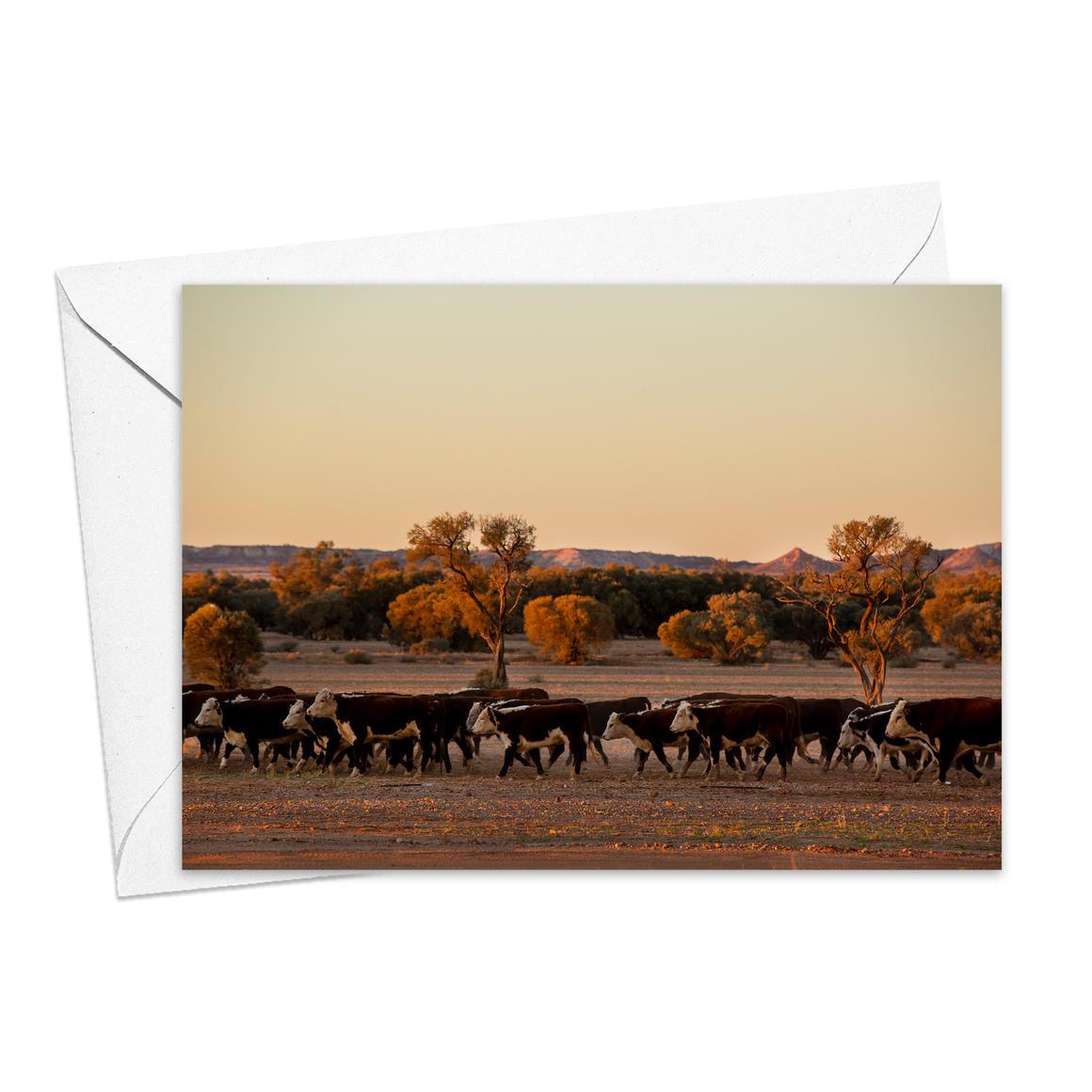 Cattle at Arckaringa Station Greeting Card   Trada Marketplace