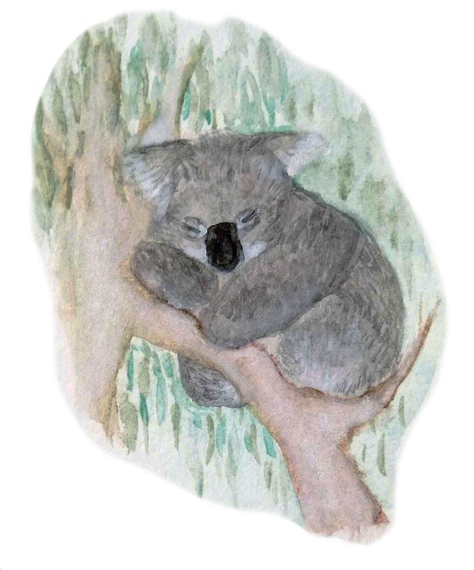 Koala   Trada Marketplace