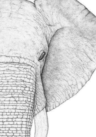 Ethan the Elephant - Right   Trada Marketplace