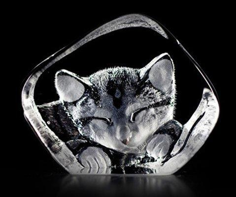 Cat | Trada Marketplace